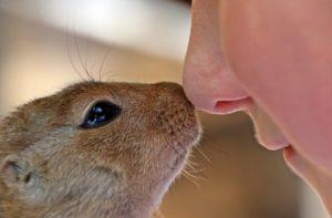 african-bush-squirrel-con-persona_paraxerus-african-squirrel-child-s-face-160411