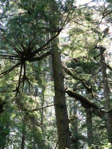 Foresta pluviale temperata, British Columbia (Canada)